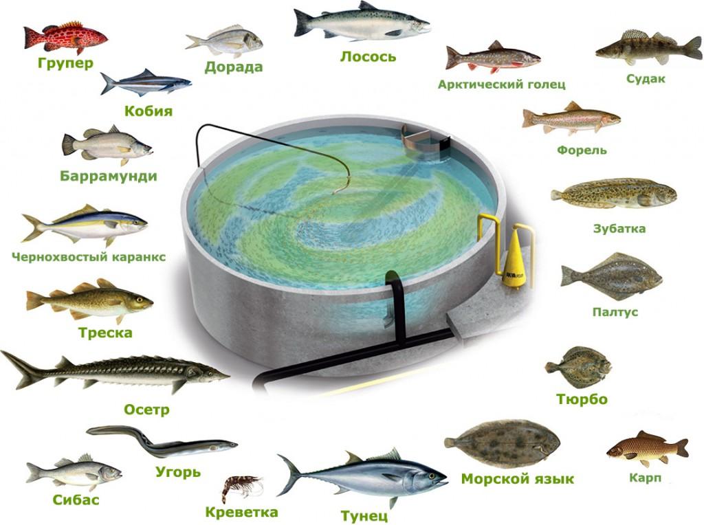 Выращивание рыбы в УЗВ