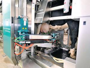 Роботизированная установка доения GEA